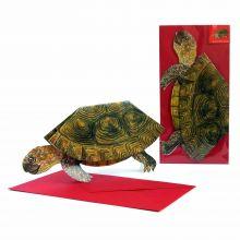 3D-Grußkarte Schildkröte