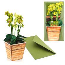 3D-Grusskarte Orchidee