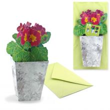 3D Greeting Card Primroses
