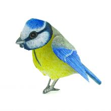 Threedimensional Blue tit as a greeting card