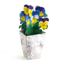 3D Greeting Card Pansy